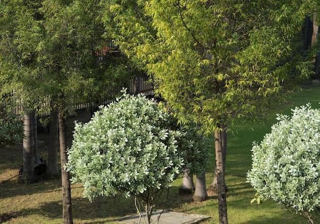 日光と庭の高い景色の木と背の高い植物