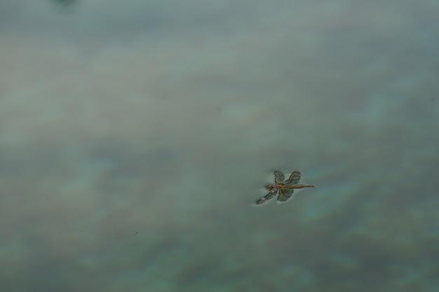 トンボが落ち、昆虫の概念のコピースペースで水に浮かんだ