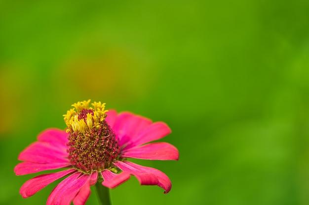 花粉の茎とピンクの花びらの花をクローズアップ