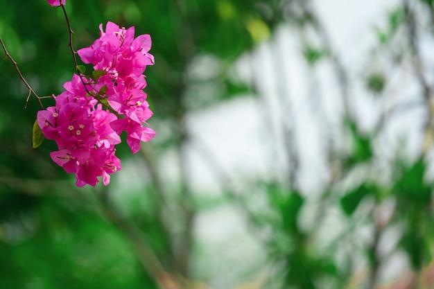木の枝にフクシアの花
