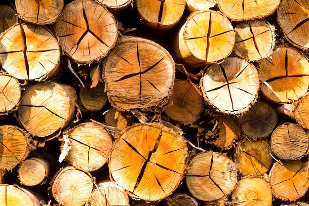 Сложенные бревна, готовые к продаже - сложенная древесина на ферме