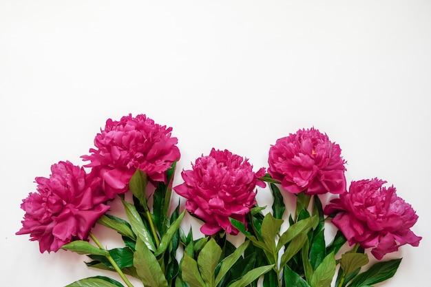 コピースペースを白で隔離されるピンクの牡丹の新鮮な枝と花のフレーム
