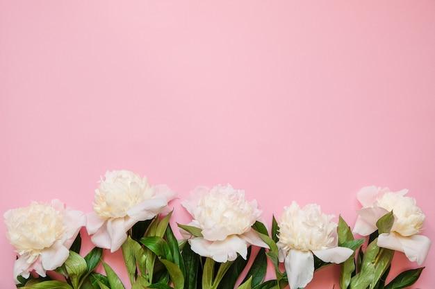 コピースペースとピンクの背景に白い牡丹の新鮮な枝と花のフレーム