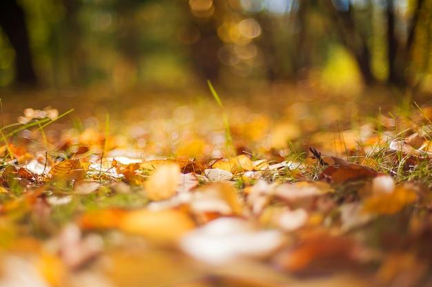 Листья осени желтые красочные греют запачканное дерево захода солнца осени.