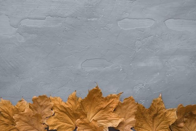 暗いコンクリート背景にカラフルなカエデの葉で作られた秋の組成