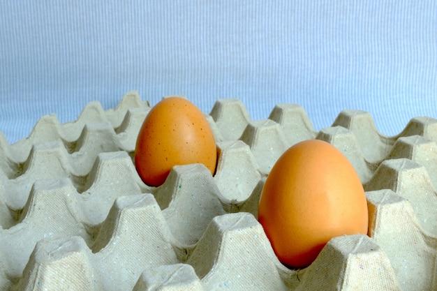 用紙トレイに載せる殻付き卵の違い