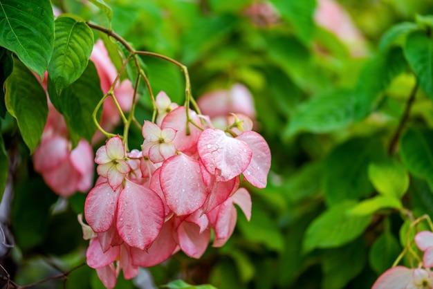 ピンクの花、背景を閉じます