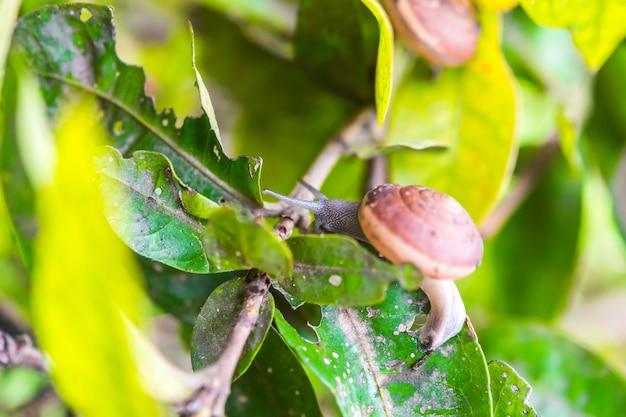 木のカタツムリ