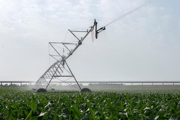 トウモロコシ畑の灌漑