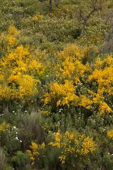 Весенняя алгарве флора