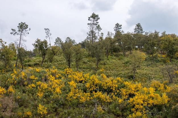 Весенняя алгарве пейзажная флора