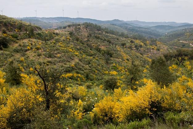 春アルガルヴェ地方の植物相