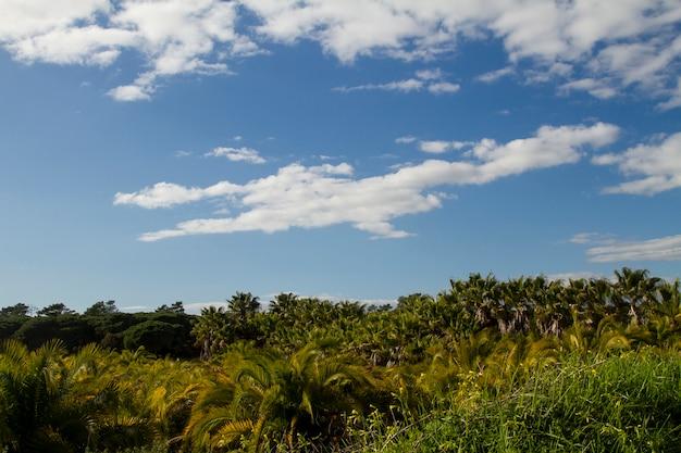 パーム油農園の風景を眺めることができます。