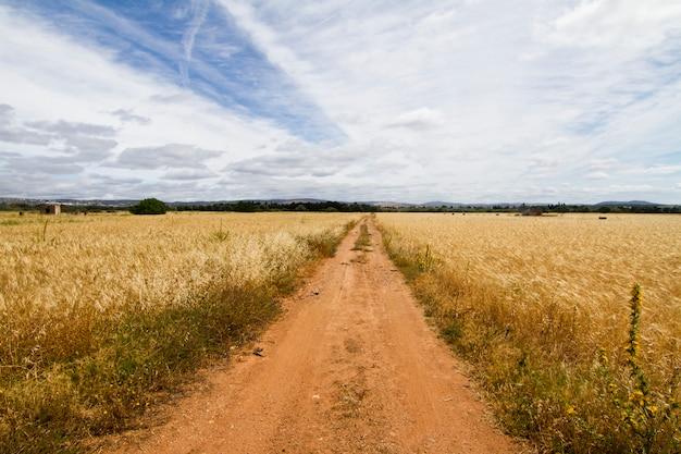 牧草地の未舗装の道路