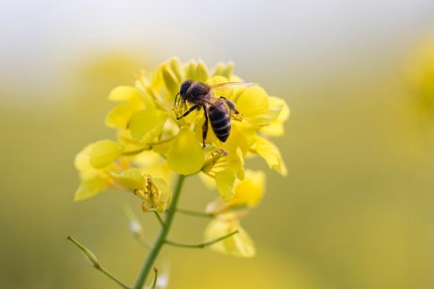 ミツバチとラパーズフラワー