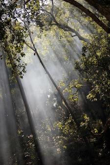 Красивый и загадочный вид солнечных лучей, пересекающих деревья в лесу.
