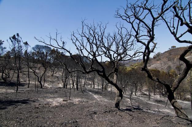 燃やされた森