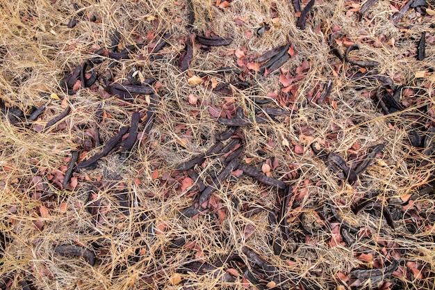地面にイナゴマメ果実の束のビューを閉じます。
