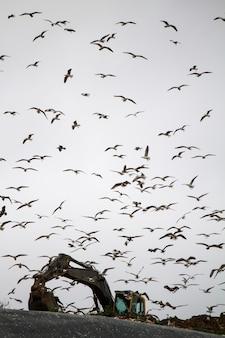 ゴミ捨て場で掘削機を囲むカモメの大群のビュー。