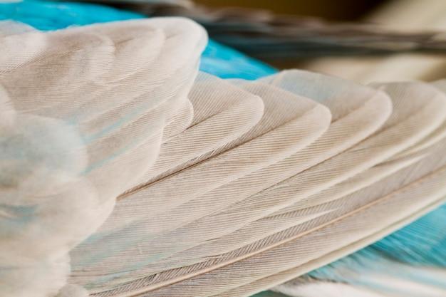 一般的なペットのインコの羽