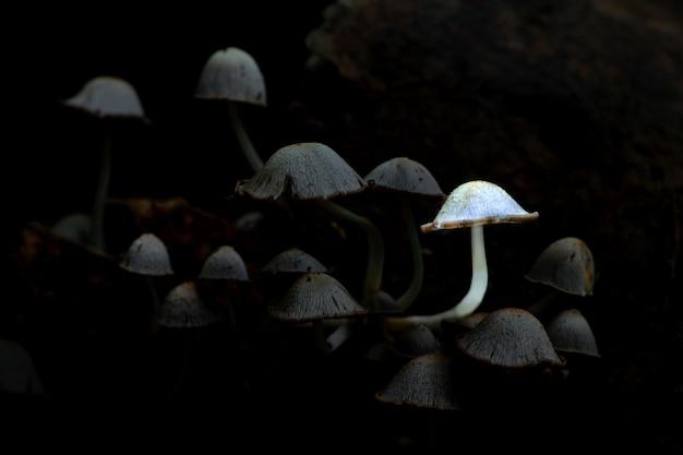 タイの自然林で輝くキノコ