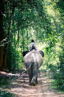 象と象の背中に乗る学生