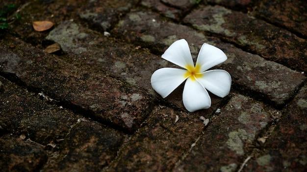 床に花します。