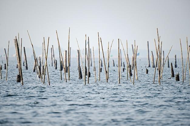 貝を養うために海に刺繍された竹