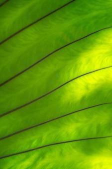 緑のシダの葉の枝