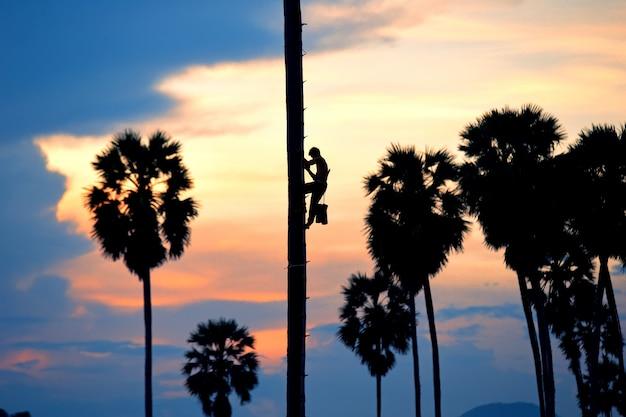 男は木のヤシに登る