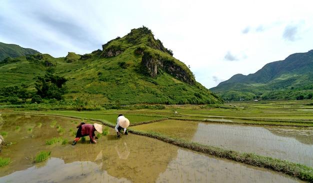 ベトナムの山米