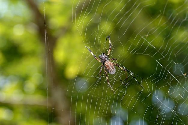 クモの巣とボケ