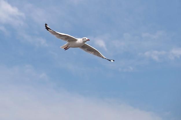 飛んでいるカモメ
