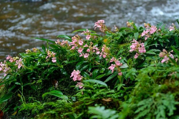 滝の近くのピンクの花