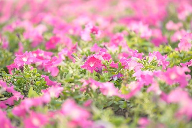 マクロピンクの花