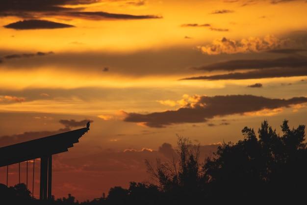 劇的な夕焼け空の風景の背景を見てシルエット鳥