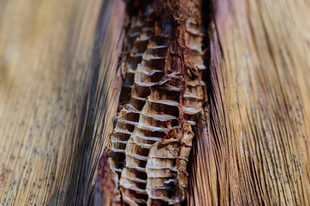 乾燥バナナの木