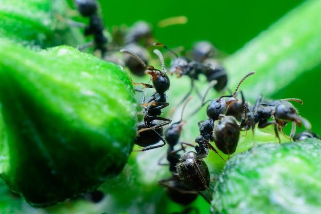 緑の木に黒いアリ