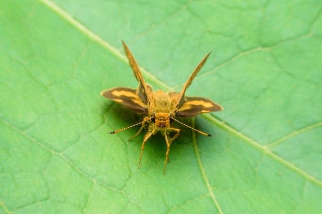 乾燥した葉に黄色の蝶