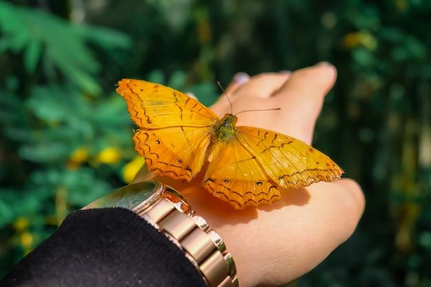 バタフライ。ぼんやりとした自然の背景に美しい熱帯蝶。カラフルな蝶