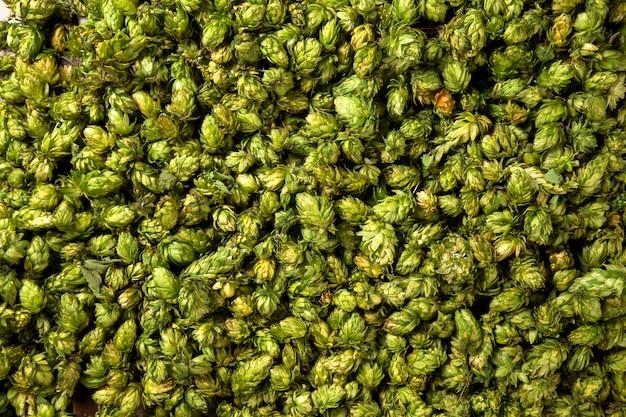 Зеленые свежие шишки хмеля для приготовления пива и хлеба крупным планом