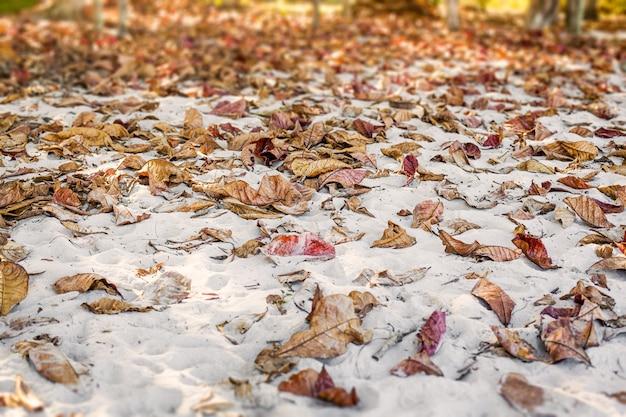 ビーチの背景に砂の紅葉