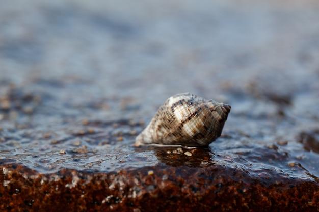 海の貝殻がビーチで岩の上に座っていた