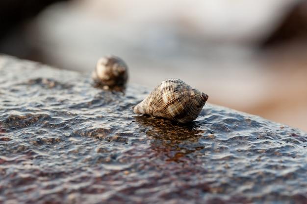ビーチで岩の上に座っている貝殻
