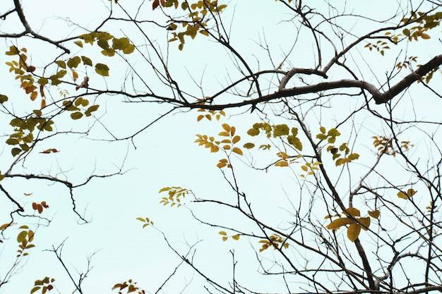 秋の黄色い葉