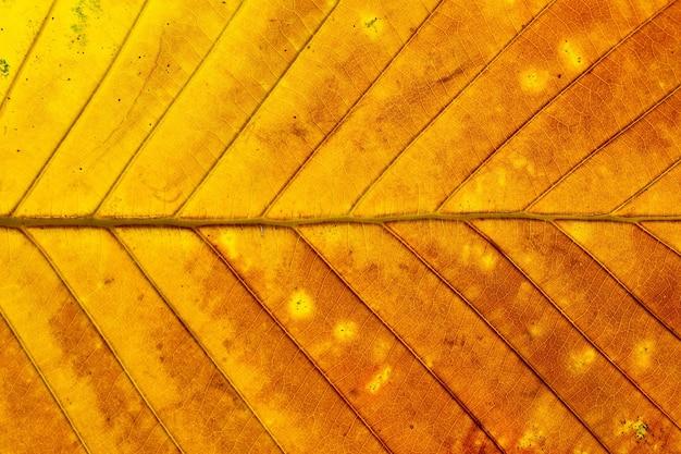 カラフルな秋の葉の質感