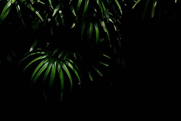 Зеленые пальмовые листья узоры в тропическом лесу - свет и тень