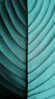 完璧な青い葉のパターン
