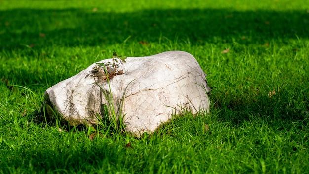 Белый камень в саду зеленой травы.