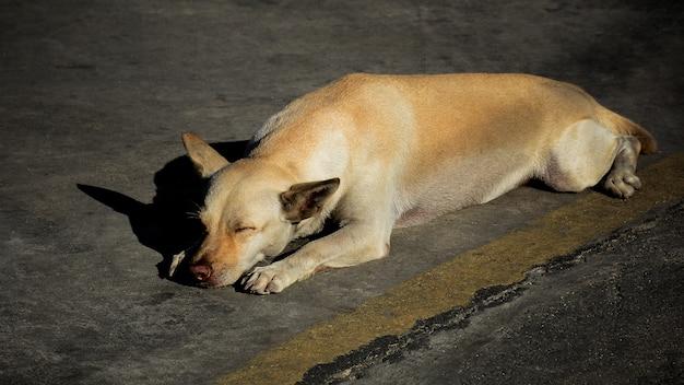 Бездомная собака болеет в городах